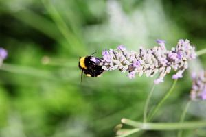 """""""Take Action Now: Tell Governor Scott to Ban Bee-Killing Pesticides""""] Photo by Callum Cockburn on Unsplash"""