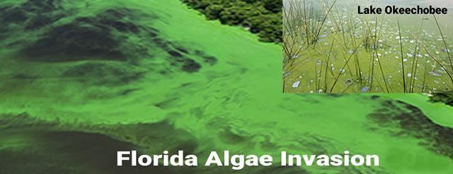 Algae Invasion!